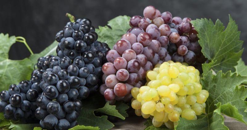 festa dell uva feta di resen